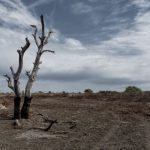 In Namibia - Presidency declares state of emergency over drought
