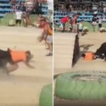 Angry Bull gored Man to death at Spanish festival - Video