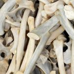South Africa seizes 12 Boxes of Lion bones at airport