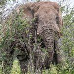 In Namibia - Australian Tourist,59 killed by Elephant