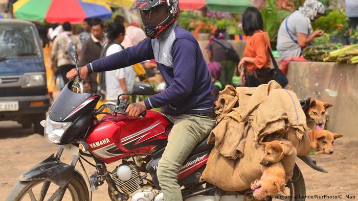India Nagaland dog meat: Animal rights groups hail dog meat ban as 'major turning point'