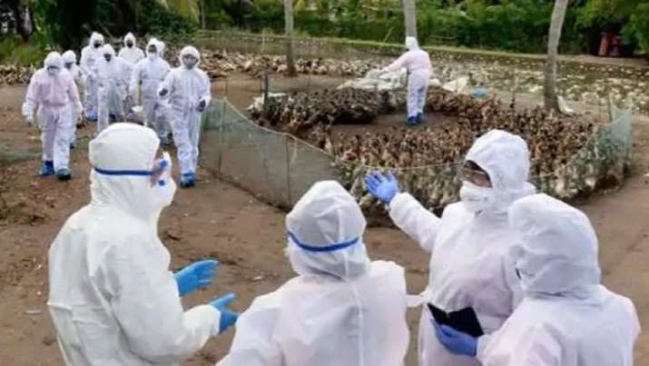 China Reports First Case of Human Infection of H10N3 Strain of Bird Flu